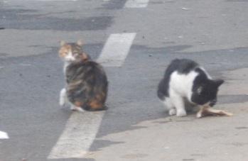 doua pisici pe strada 6
