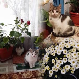 pui de pisica frumosi